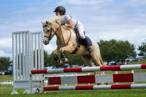 Top Quality Welsh A - Small Pony