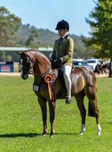 Manorvale Look Again - Large Hunter Pony