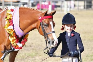 Mother's Dream Schoolmaster Show Pony