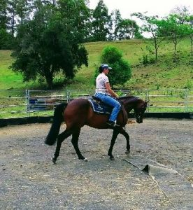 Registered ASH Gelding - Small Hack
