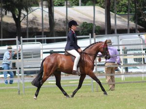Lyndhurst Pretty Girl - Medium Open Pony