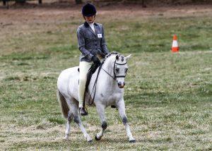 Burrowa Prince Ali - Small Pony Gelding