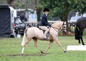 Bremala Buttercup - Lead Rein Newcomer Pony