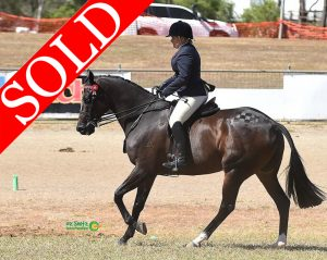 SOLD!! - Reliable, Competitive Large Hack