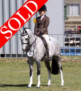 SOLD!! - Talented Performance Pony