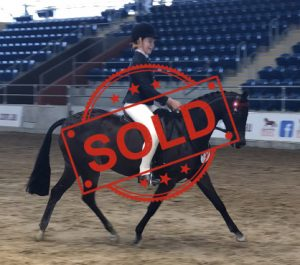 SOLD!! - Child's Super Open Large Pony