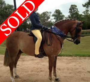 SOLD!! - Child's Large Hunter Pony