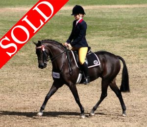 Euston Westerly - SOLD!!
