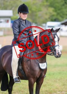 SOLD!! - Large Show Hunter Pony