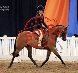 SOLD!! - Open Large Pony