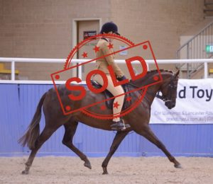 SOLD!! - Show Hunter Pony