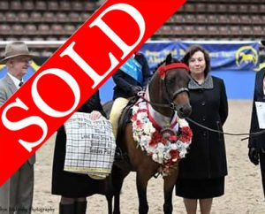 Final Call Of Priory - Leading Rein Pony