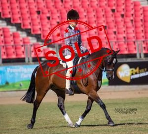 SOLD!! - Show Hunter Pony