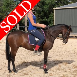 SOLD!!! - Gorgeous Hunter Pony