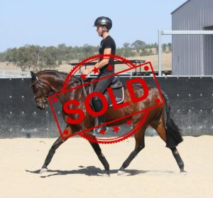 SOLD!! - Large Open Galloway