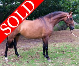 SOLD!!! - To Be Sure of Astral