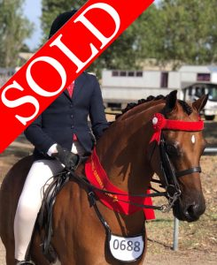 SOLD!! - Open Small Pony