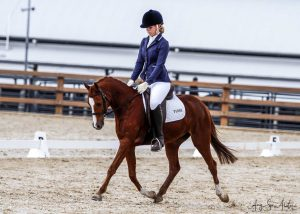 Stunning Dressage/Show Pony