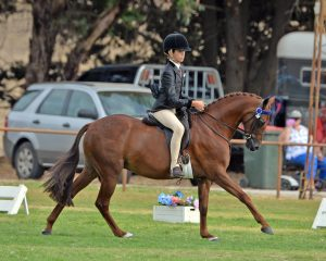 Thorwood Prince Charming - 12.2h Open Show Pony