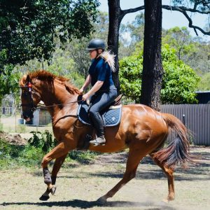 Beautiful Small Hack - OTT Gelding.