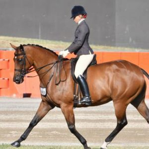 Small Show Hunter Hack - Royal Show Open Winner