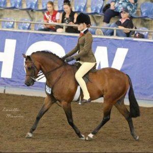 Binnowie Rave Review - Childs Show Hunter Pony