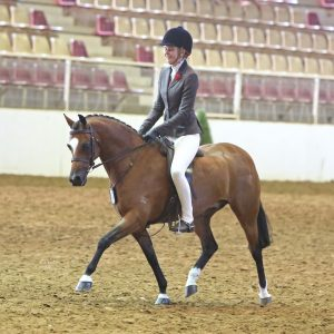 Clemson Dazzle -  Large Show Hunter Pony