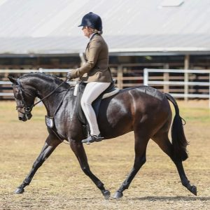 Rosedale Olympia - National Quality Pony.