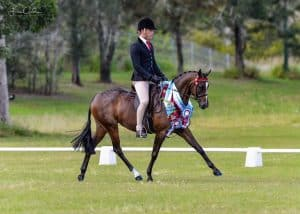 Whitmere Heaven Sent - Large Pony Mare
