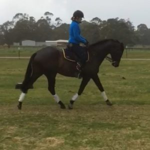 Lovely Thoroughbred Dressage Prospect