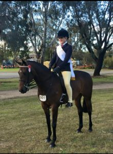 MP Serenity - Large Show Hunter Pony