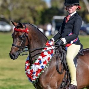 Outstanding National Quality Large Pony