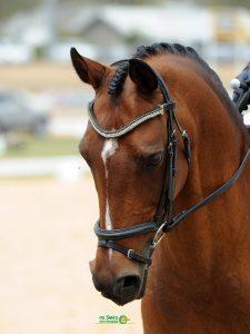 Mother's Dream Performance Pony - A true Schoolmaster
