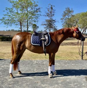 Superstar in the making - Small Pony Mare