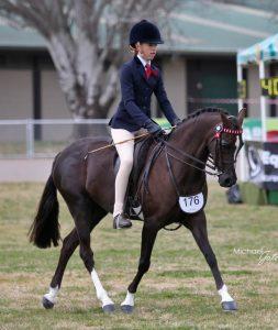Koorana Forever - Open Large Pony