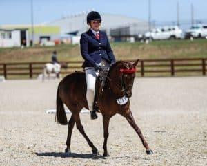 Northridge Triple Treat - Open Large Pony