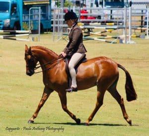 Large Show Hunter Pony