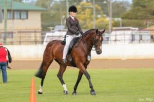 Stunning Broodmare - Warmblood Mare
