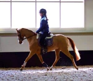 A gem of a Pony - Interschool or All Rounder
