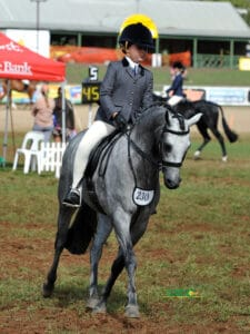 Exquisite Large Hunter Pony - Bamborough Renegade