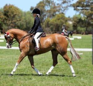 Falconhurst Just Dance - Large Pony