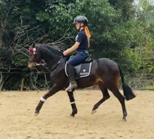 DP Tiger King - Small Newcomer Pony