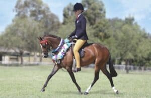 Rathowen Sorcery - Small Pony, Broodmare
