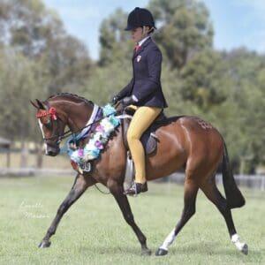 Rathowen Sorcery - Small Pony, Broodmare
