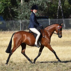 Mandaley Self Portrait - Open large Pony