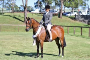 Large Hunter Pony & Pony Dressage Mare