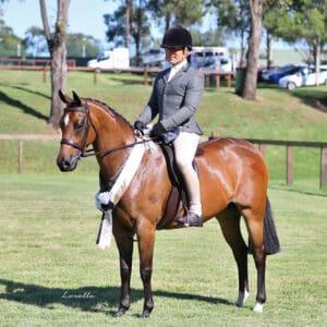 Large Hunter Pony & Pony Dressage Mare