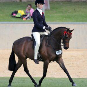 National Quality Large Pony