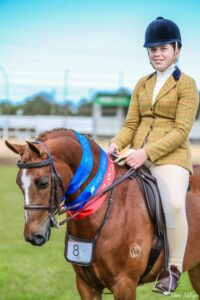 Tamrie Park Protectionist - Large Hunter Pony