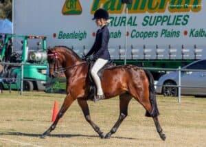 Willowcroft Hope Diamond - Large Pony